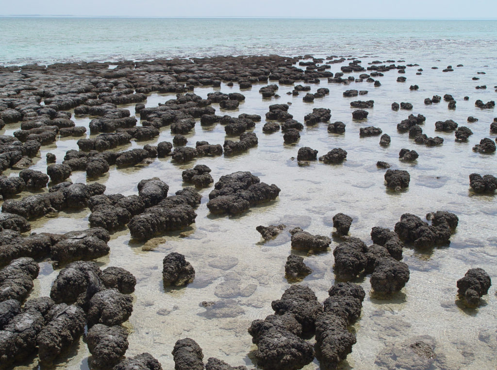 Rezente Stromatolithe