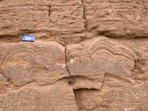 Stromatolith im Querschnitt